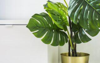 decorar con plantas reformar piso en mercado ruzafa valencia