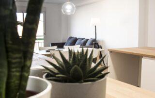 Detalle decorativo plantas en vivienda reformada en Valencia Serrería